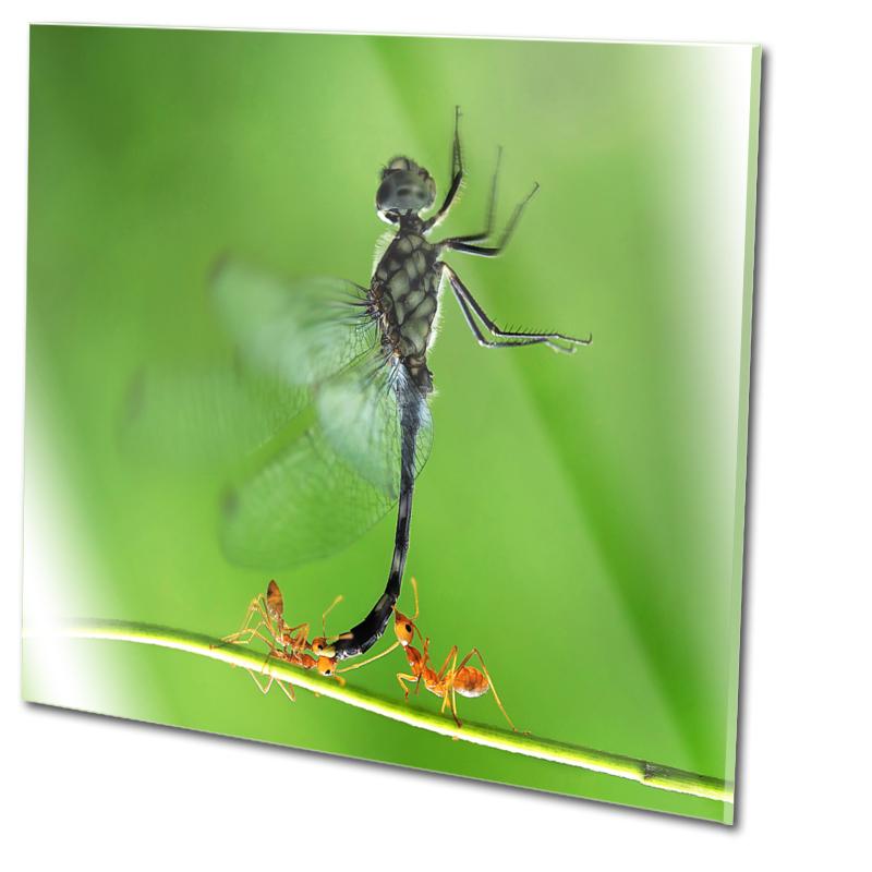 insekten schutz preisvergleich die besten angebote online kaufen. Black Bedroom Furniture Sets. Home Design Ideas