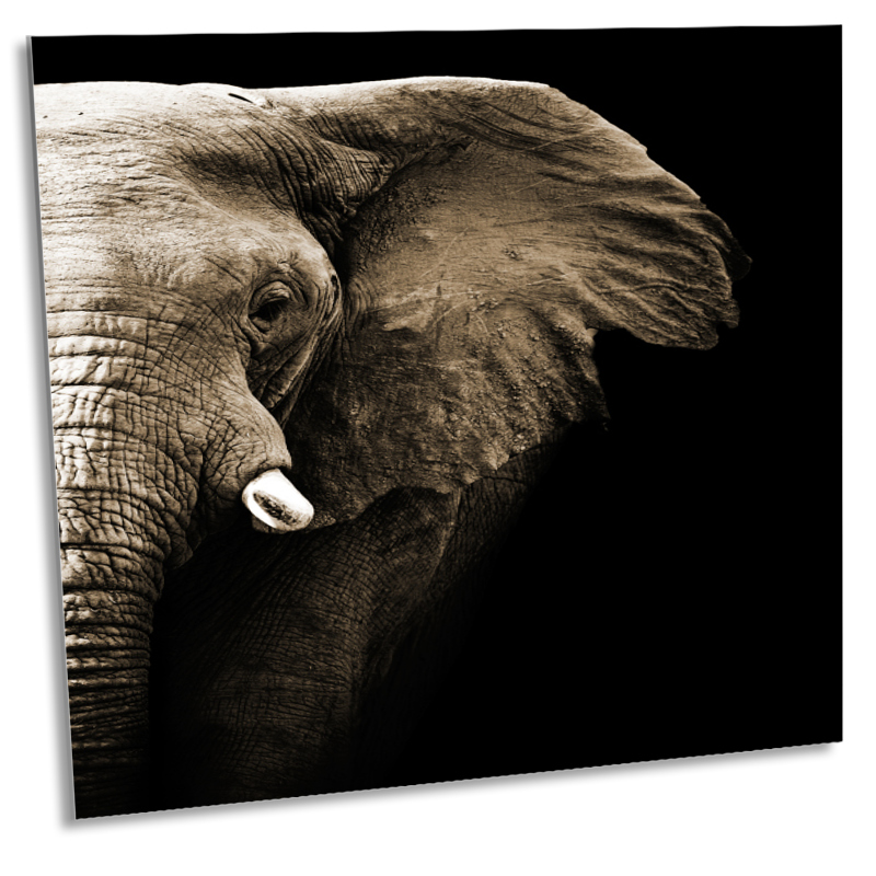 elefant bild auf leinwand preis vergleich 2016. Black Bedroom Furniture Sets. Home Design Ideas