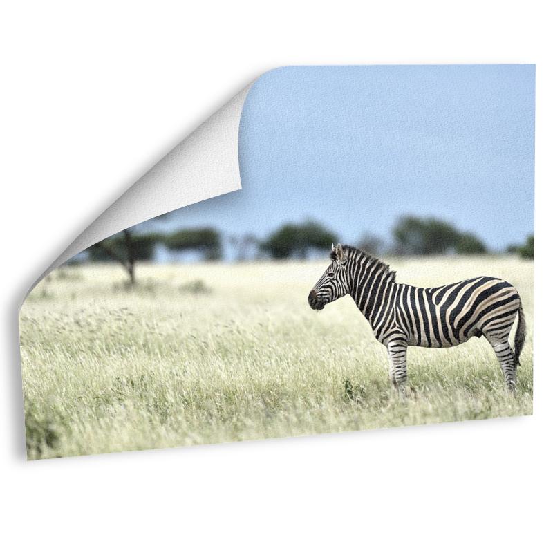 Zebra Fotografie Fotoabzug auf Hahnemühle