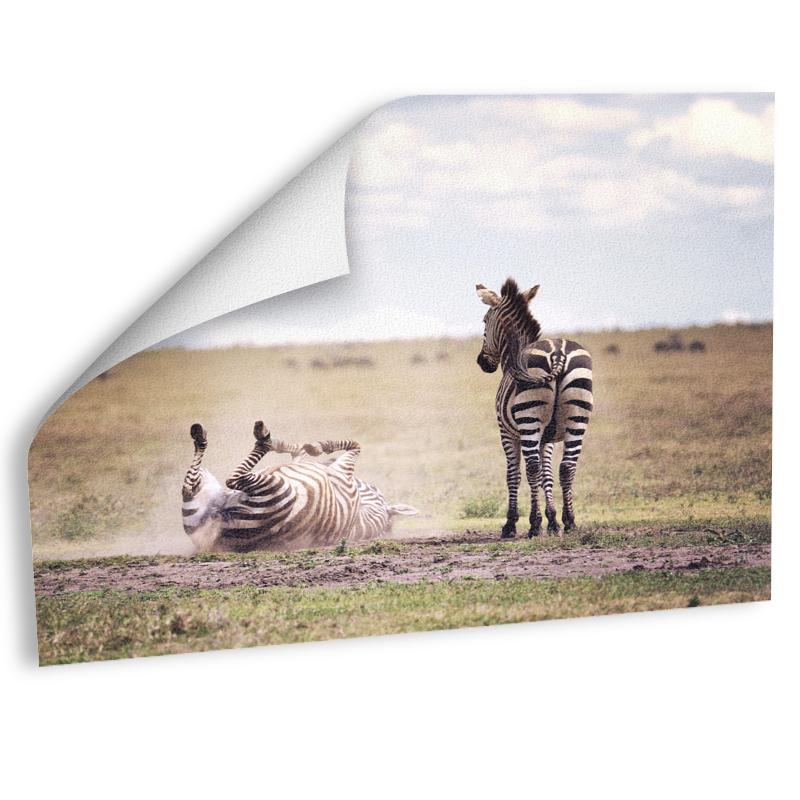 Zebras Fotografie Fotoabzug auf Hahnemühle