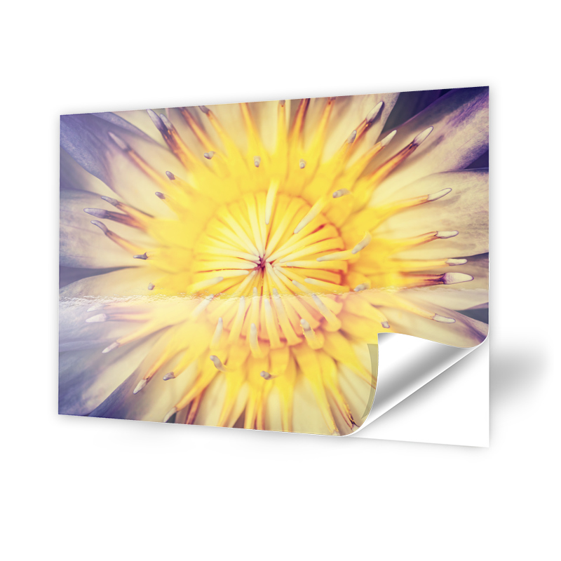 Lotusbluete Fotofolie