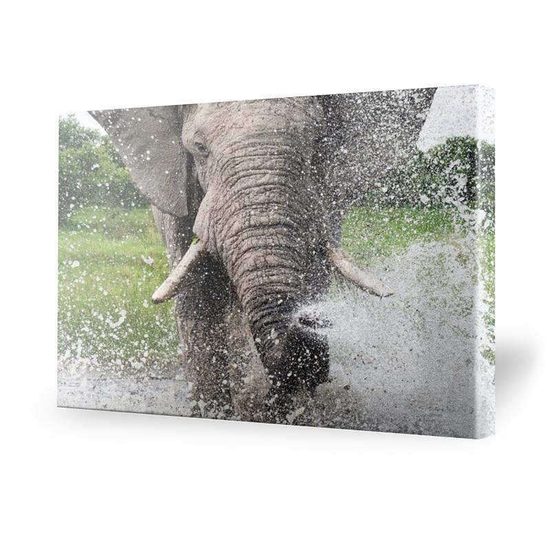 leinwand elefant preisvergleich die besten angebote online kaufen. Black Bedroom Furniture Sets. Home Design Ideas