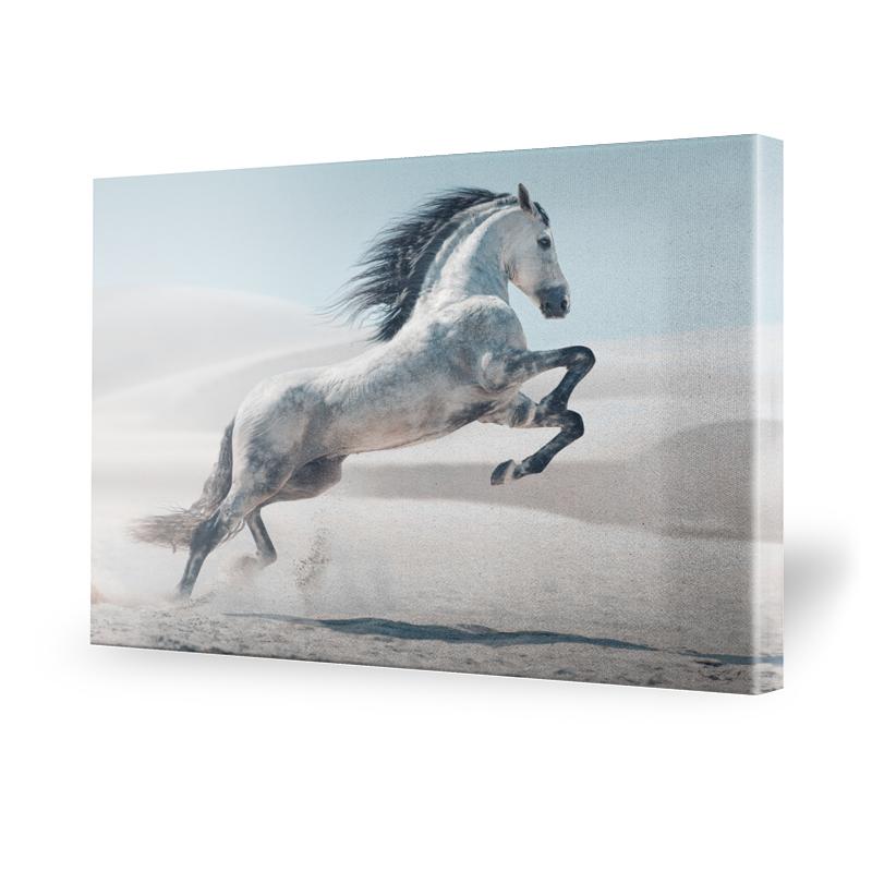 leinwand pferde preisvergleich die besten angebote online kaufen. Black Bedroom Furniture Sets. Home Design Ideas