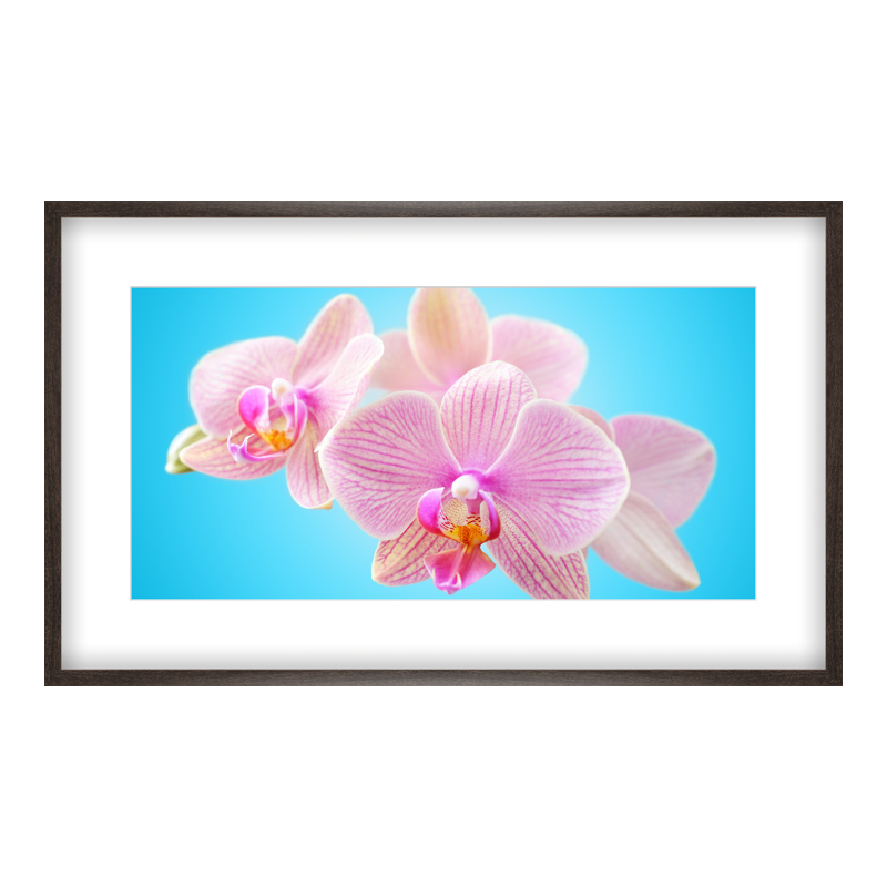 Orchidee Motiv Poster drucken im Holzrahmen gemasert in braun bei Myposter.de